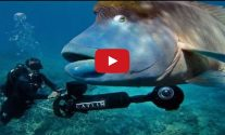 Google Releases Stunning Underwater Street View For World Oceans Day