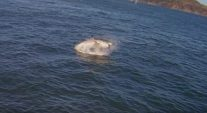 An Alcatraz Ferry Captured THE BEST Video of that Great White Shark Attack in San Francisco Bay