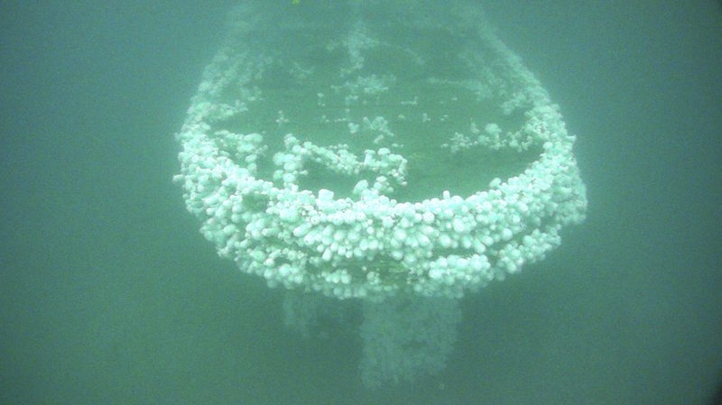 Stern view of the shipwreck USS Conestoga colonized with white plumose sea anemones contrasting the water column. Credit: NOAA ONMS/Teledyne SeaBotix