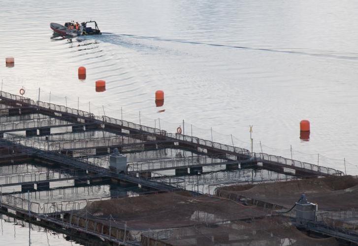 Chilean salmon fish farm