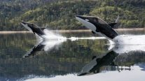 WATCH: ORCA, The Flipping Cool Jetski That Dives, Jumps & Spouts Geysers