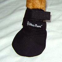dog shoe3