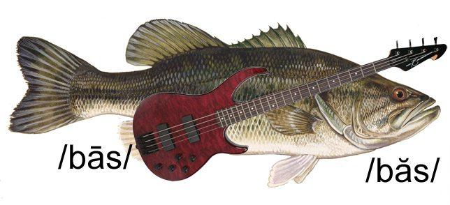 bassbass