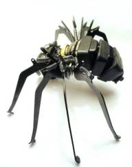 jeremy-mayer-insect