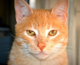 Inteligencia Artificial: .¿Cuántas computadoras necesitaron para reconocer un gato?