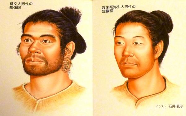 繩文人與彌生人之比較圖。來源:http://blogs.yahoo.co.jp/narusara_ikiru/33016798.html