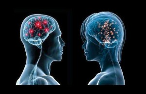 brains-men-women