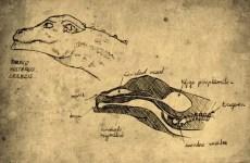 De Natura Draconis, el aparato fonador