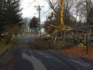 Fallen branch today 1