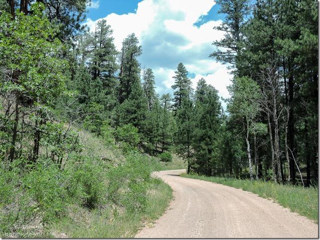 FR425 Kaibab National Forest Arizona