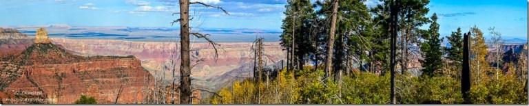 Fall aspen & Mount Hayden Ken Patrick trail North Rim Grand Canyon National Park Arizona