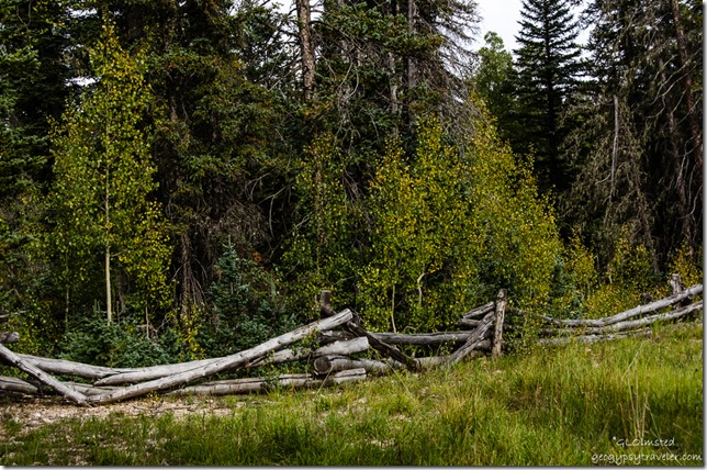 Fall aspen & fence Kaibab Kaibab National Forest Arizona