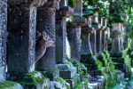 Deer in the temple grounds, Nara Park