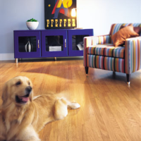 The Best Types of Flooring For Your Furry Friends!