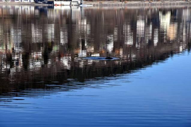 poisson lac Gérardmer (3)