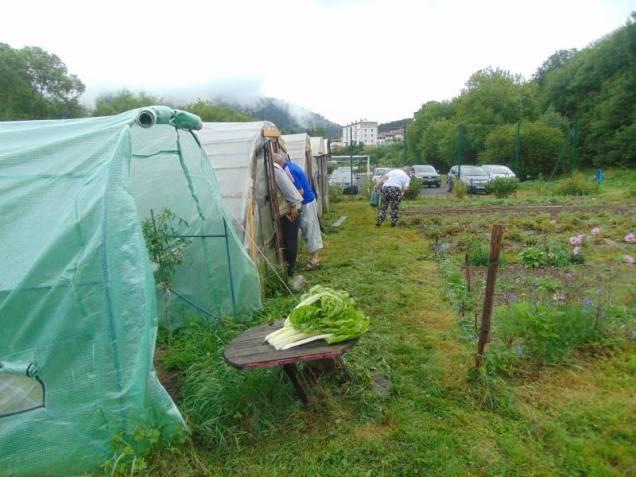 jardins solidaires jamagne kiwanis 2018 (4)