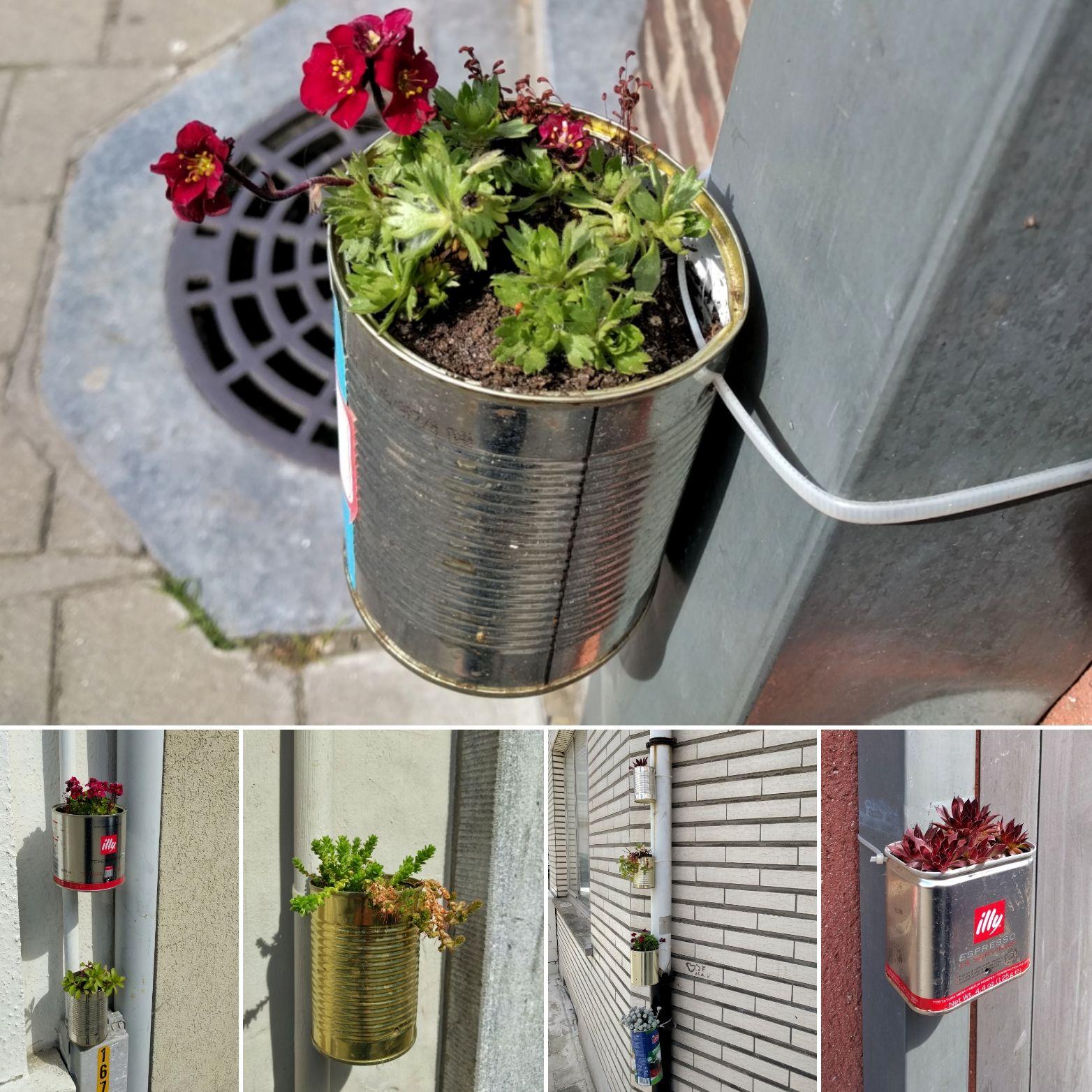 buurt opfleuren plantjes in blik