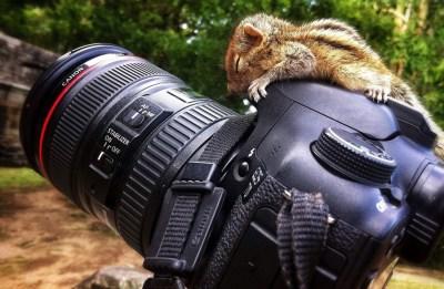 Wallpaper : squirrel, Reflex, Canon 7D, single lens reflex camera, reflex camera, 2048x1341 px ...
