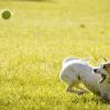 シューマッハ(お笑い芸人)の犬ネタが面白い!プロフィールや経歴もチェック!
