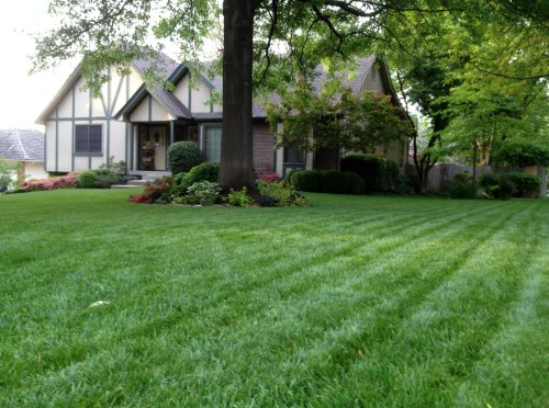 Medium Of Beautiful Lawn And Landscape