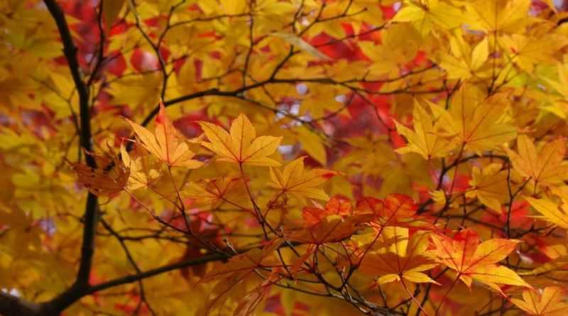 Autumn Colors Guide