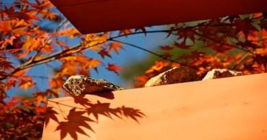 gethiroshima autumn colors guide