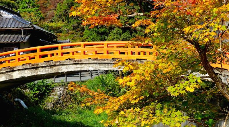 autumn leaves catch the sunlight at sekiun bridge taishaku-kyo hiroshima