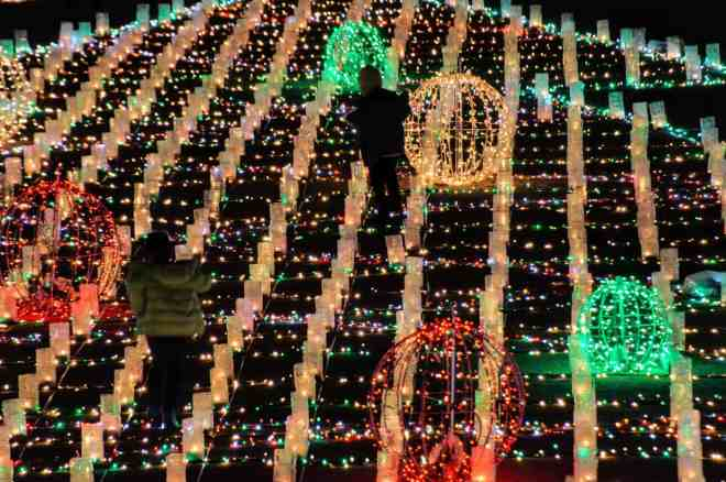 hiroshima-botanical-gardens-christmas-illuminations-04