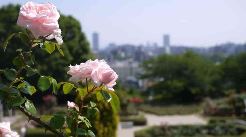 Great view of Hiroshima city from the rose garden in Ushita Sogo Koen Park