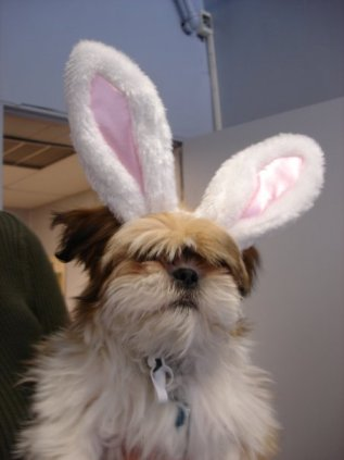Sidekick Suki dressed up as the Easter Bunny