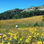 I just had to Run Through the Wildflowers... Lifelong Dream