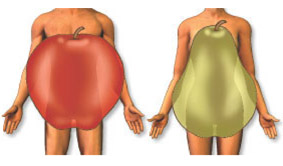 apple_and_pear_bodies