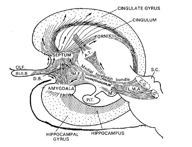 LImbic subsystems