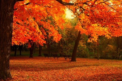 Cool Fall Backgrounds (69+ images)