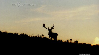 Hunting Wallpaper and Screensavers (48+ images)