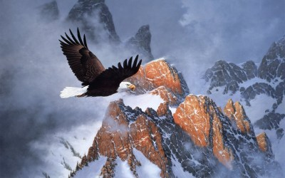 Bald Eagle Wallpapers (63+ images)