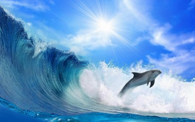 Dolphin Wallpapers (69+ images)