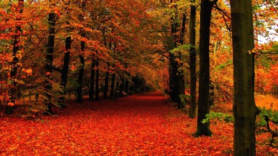 Autumn HD Wallpapers 1080p (76+ images)
