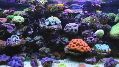 Animated Aquarium Desktop Wallpaper (53+ images)