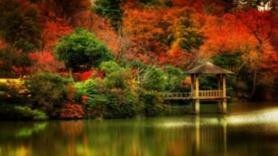 Fall Scene Wallpaper (35+ images)