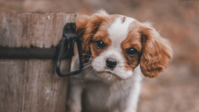 Cute Puppy Background (53+ images)