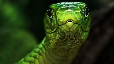 Cool Snake Wallpapers (65+ images)