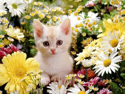 Cute Kitten Desktop Wallpaper (60+ images)