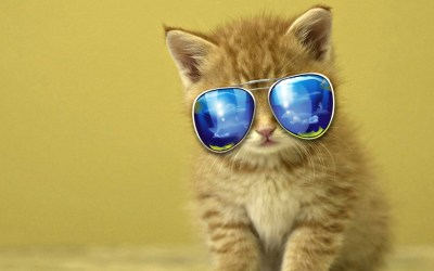 Cool Cat Wallpaper (71+ images)
