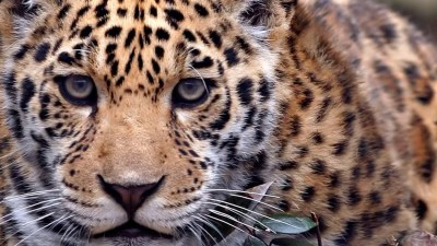 Wild Animals Wallpapers (57+ images)