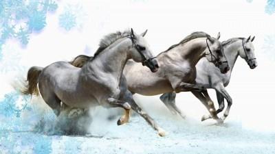Running Horses Wallpaper (63+ images)
