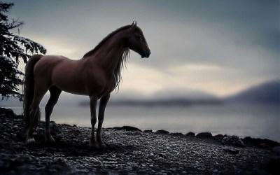 Arabian Horse Wallpaper (55+ images)
