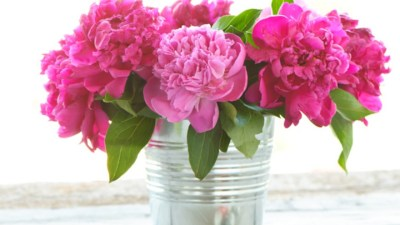 Desktop Wallpaper Peonies (57+ images)