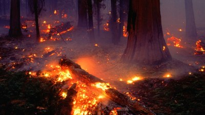 Forest Fire Wallpaper (54+ images)