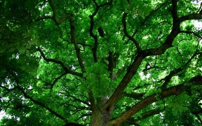 Desktop Backgrounds Trees (56+ images)